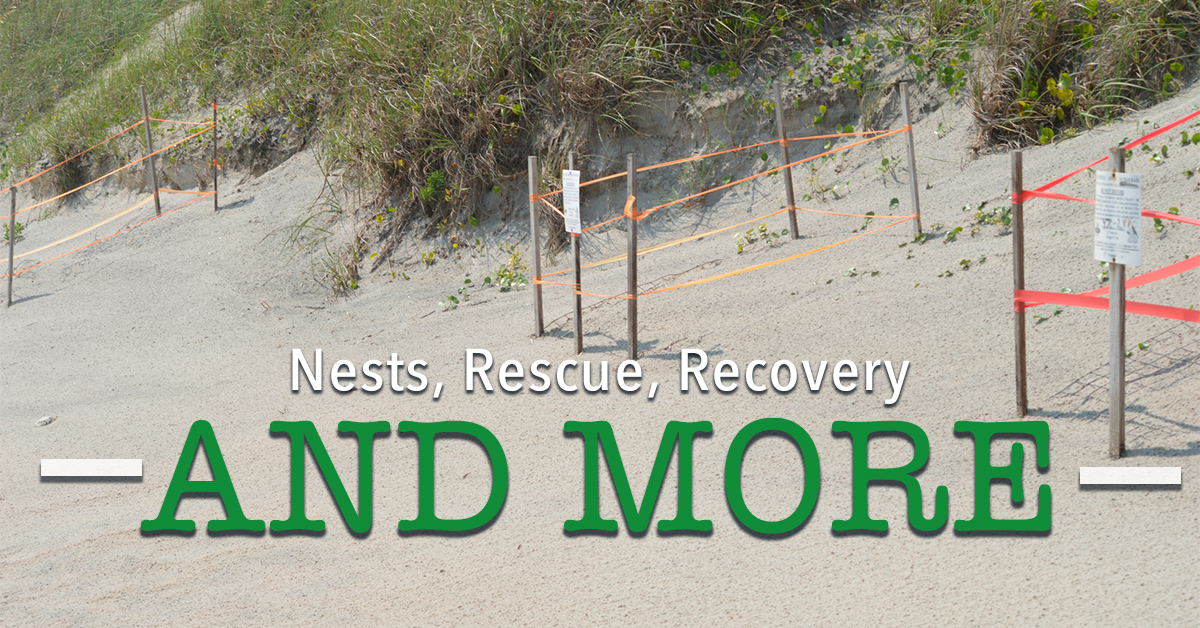 Nests, Rescues, Recoveries, and More