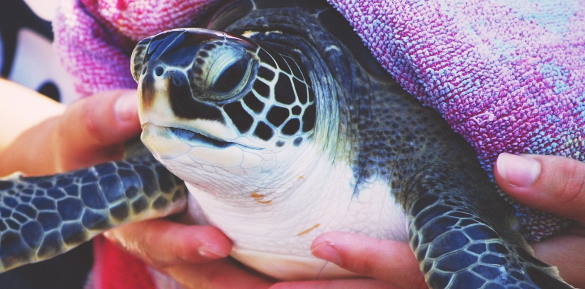 sea turtle at Karen Beasley Sea Turtle Hospital | SeaShore Realty