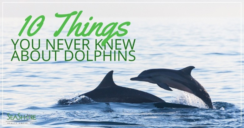 10 Things You Never Knew About Dolphins