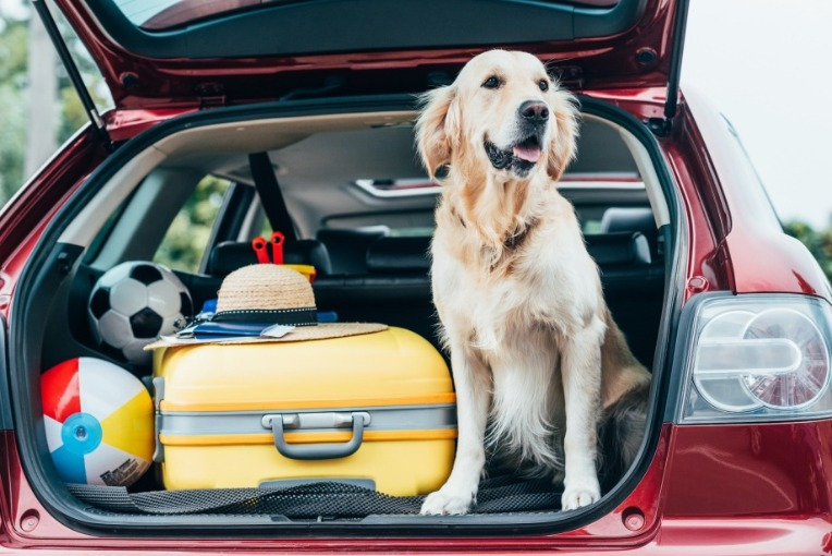 Checklist for traveling with your dog | Seashore Realty