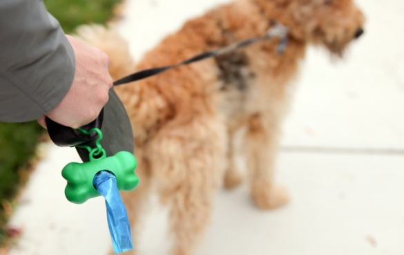 Please clean up after Fido | Seashore Realty