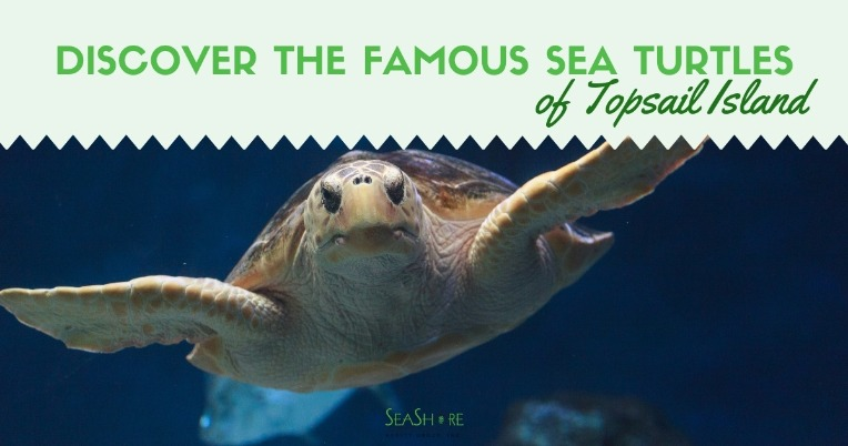 Discover the Famous Sea Turtles of Topsail Island | Seashore Realty